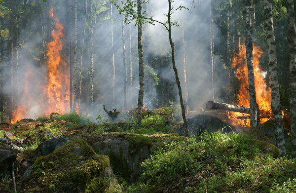 forest-fire-432870_1280